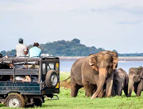 Thailand Nature Tour: Breathtaking Nature of the South